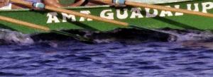 amaguadalupekoa2